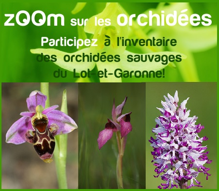 orchidee sauvage lot